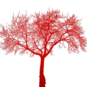 Dead tree red
