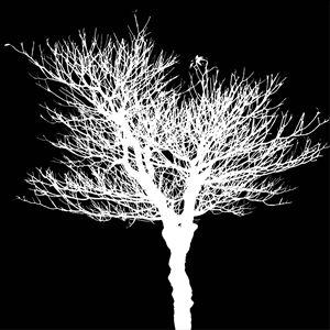 Dead tree white