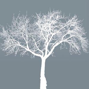 Dead tree gray