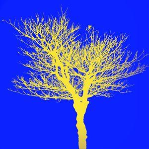 dead tree yellow
