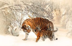 That Time When Tigger Froze to Death