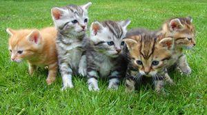 You've Gotta Be Kitten Me