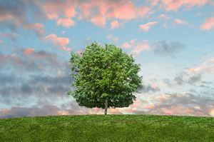 It's a Tree.