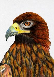 Golden Eagle Bird Watercolor Artwork