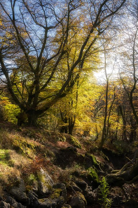 The forest at Bracklin Falls - Jeremy Lavender Photography