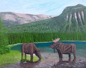 Moose at Akamina Lake