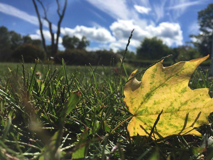 First Sign of Autumn - Brogan Fine Art