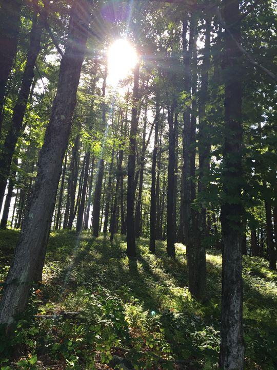 Sunny Forest - Brogan Fine Art