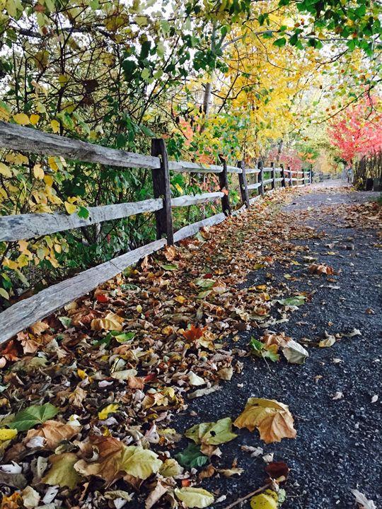 Autumn Path - Brogan Fine Art