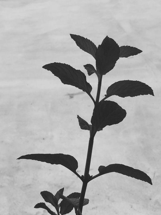 Shadow of a stem - Brogan Fine Art