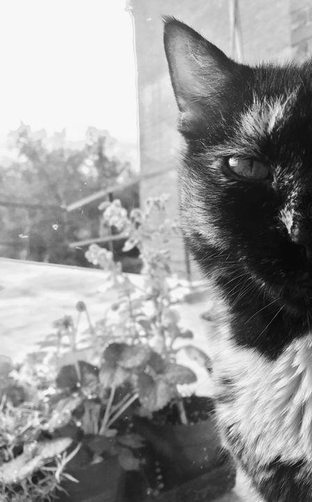 Cat Face - Brogan Fine Art