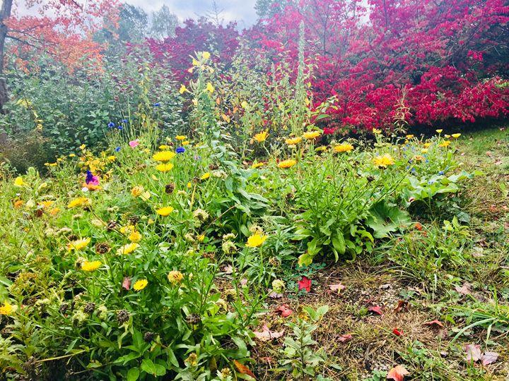 Wildflowers - Brogan Fine Art