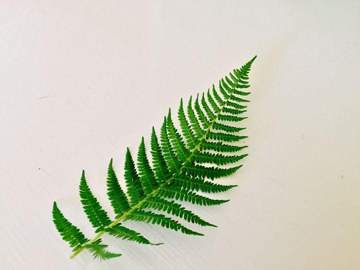 Fern - The Shape of Nature - Brogan Fine Art
