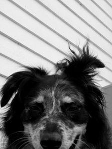 Dog's Face - Brogan Fine Art