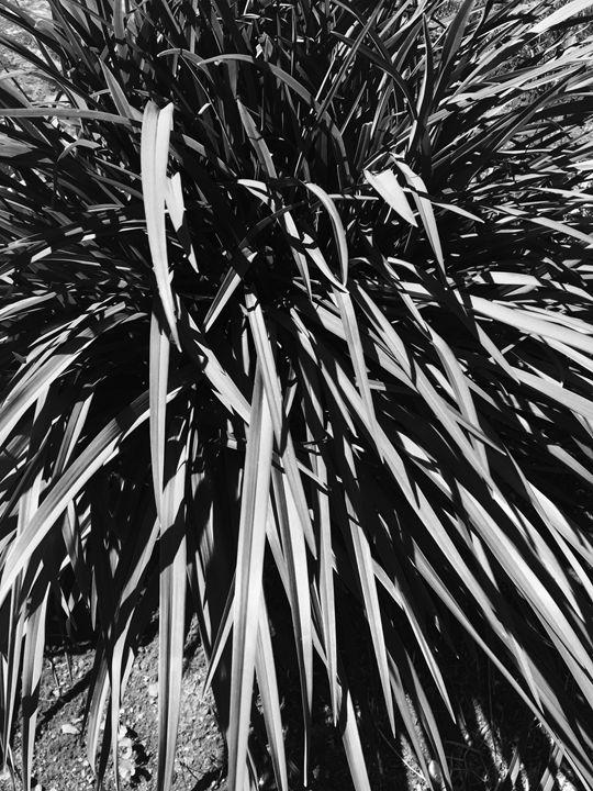 Black and white grasses - Brogan Fine Art