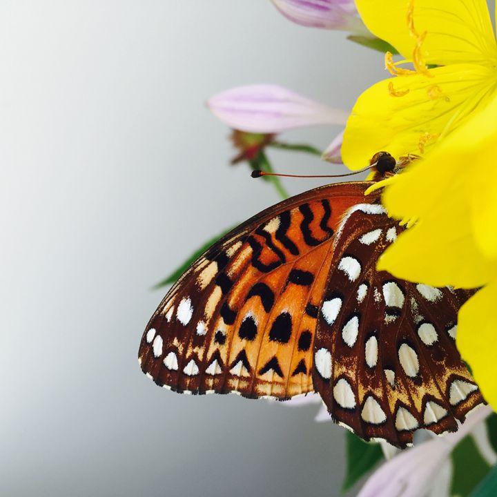Butterfly on a Flower - Brogan Fine Art