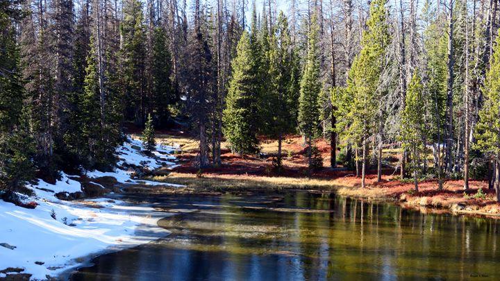 Seasonal Pond - Brian Shaw