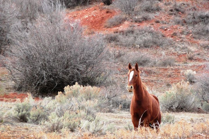 Star Horse in Red Clay - Brian Shaw