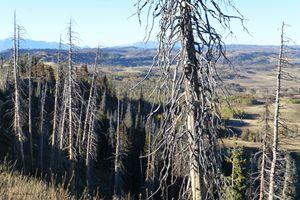 Gnarled Pine Overlook