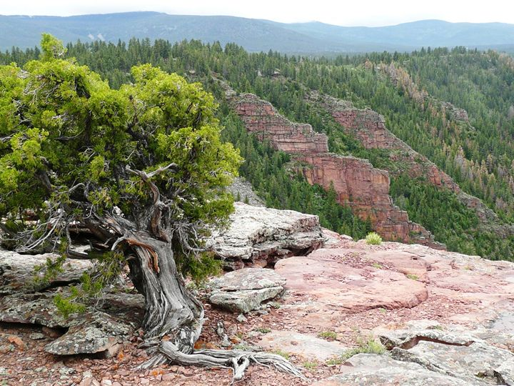 Juniper and Red Cliffs - Brian Shaw