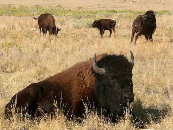 Sitting Bull - Brian Shaw
