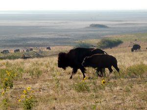 Buffalo Angst - Brian Shaw