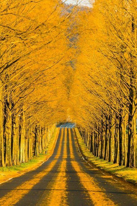 Fall On The Road - KnKSTUDIO