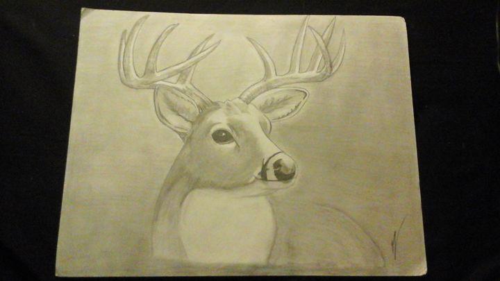 Buck lokking into distance - Vanessa