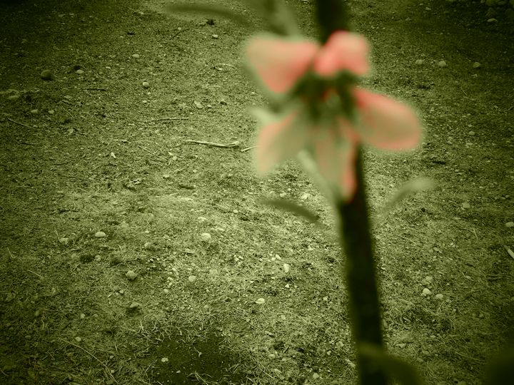 first flower of spring - katinc