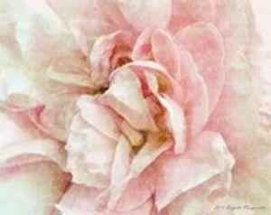 Shabby Cottage Rose