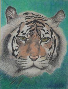 Tiger @ 1