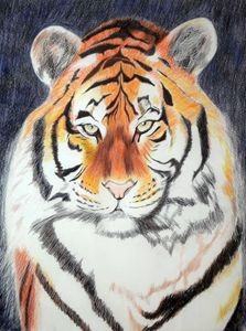 Tiger # 2