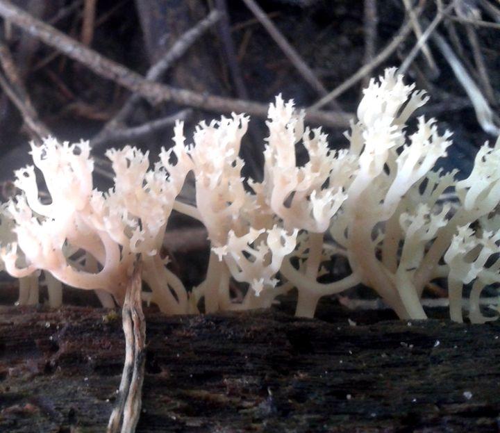 fungi - dianestudio