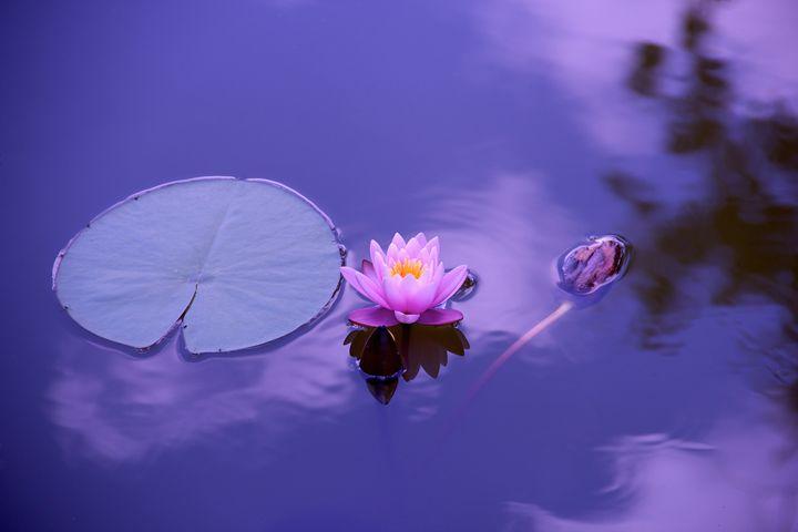 Lotus - Best Offers