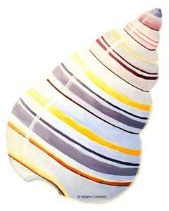 Colorful Spiral Seashell