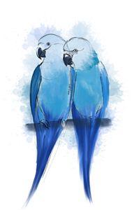 Pair of Spix Macaw - Sara XXII