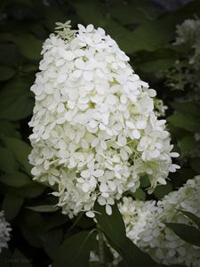 Church Garden Flower