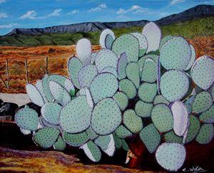 Chuckwalla cactus
