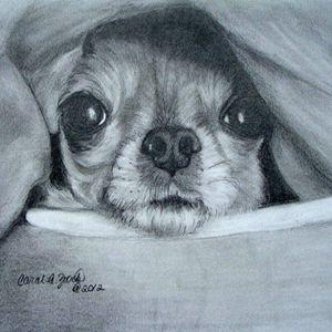 Chihuahua Commission