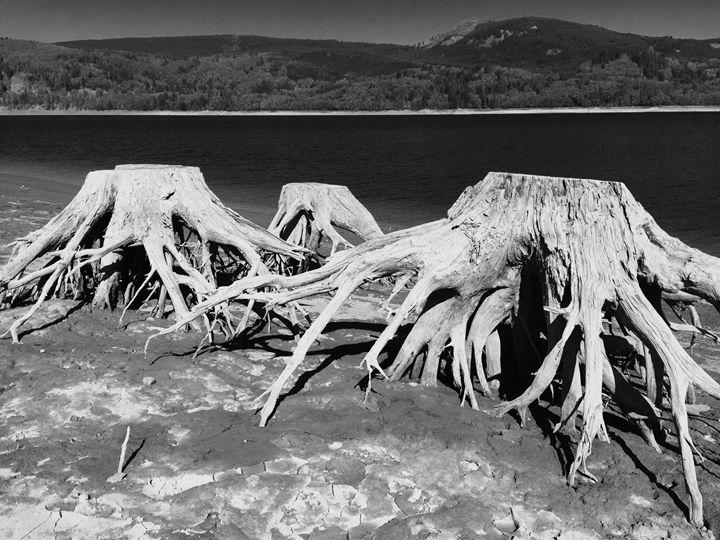 Riffe Lake Trunks, October - Rebecca Sandora