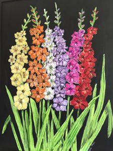 Multi-colored Gladioli