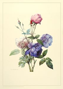 Blu Aster and Anemoes and rosebud - Wm Rease Design.com