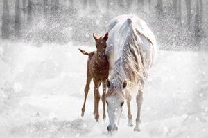 Mother and Colt - Barbee's Photography