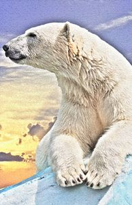 Polar Bear - Animal Art