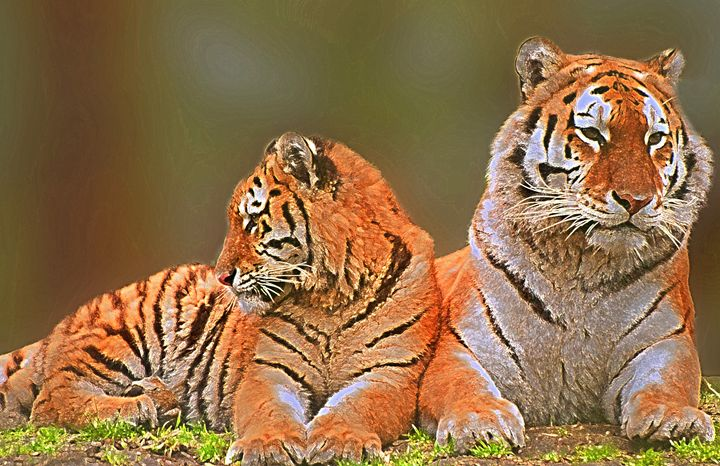Tigers - Animal Art