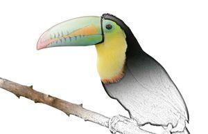 Tucan - Animal Art