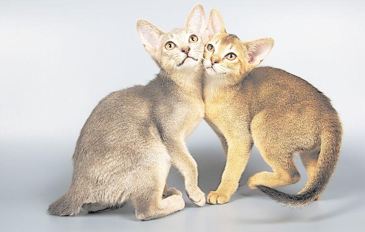 Kittens Hugging - Animal Art