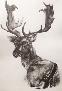 Fallow Deer. Pencil drawing on A3 pa