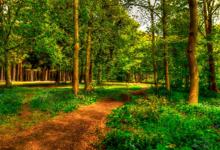 Path Leading off into Abbots Woods - Lionel Fraser, Pictures of Eastbourne, England