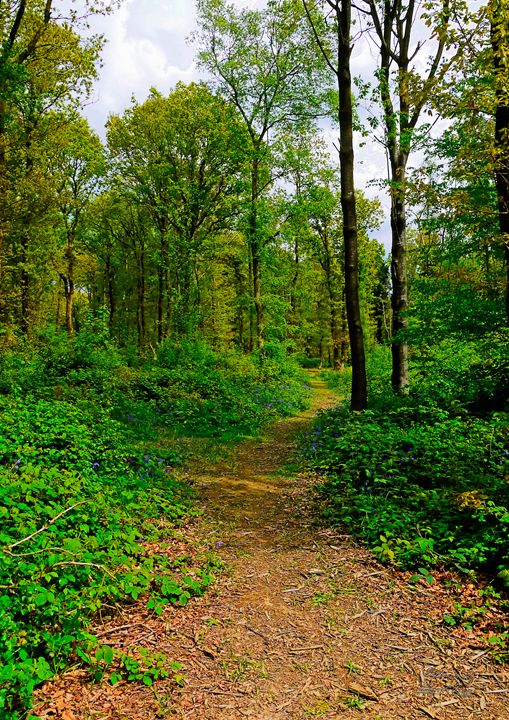 HDR Path Trail Through Abbots Woods - Lionel Fraser, Pictures of Eastbourne, England
